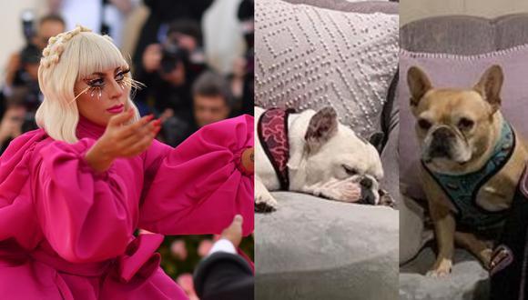 A la derecha, dos de los tres bulldog franceses de Lady Gaga. Dos de estas mascotas fueron robadas y, en el proceso, el cuidador de los animales fue herido de bala. Fotos: Angela Weiss para AFP/ @ladygaga en Instagram.