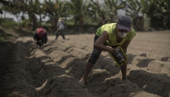 FAE-Agro ha sido objeto de cuestionamiento dado que la mayoría de los pequeños productores todavía no han recibido créditos. (Foto: Anthony Niño de Guzmán / GEC)
