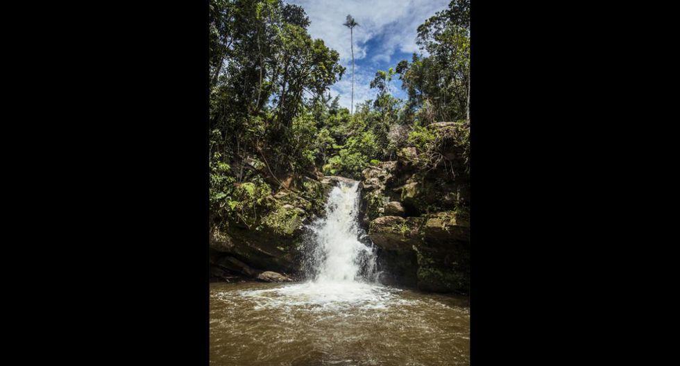 Cascada El León. Se encuentra en el distrito de Villa Rica, en la provincia de Oxapampa. Consta de dos saltos de agua del río Yezú. Estos alcanzan una altura de 4 y 7 metros, respectivamente. (Foto: PromPerú)