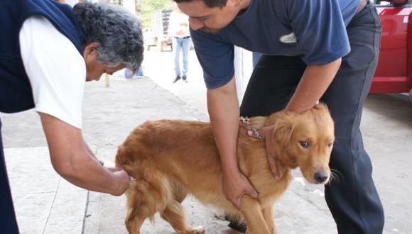 Junín: 3.700 personas fueron mordidas por perros este año