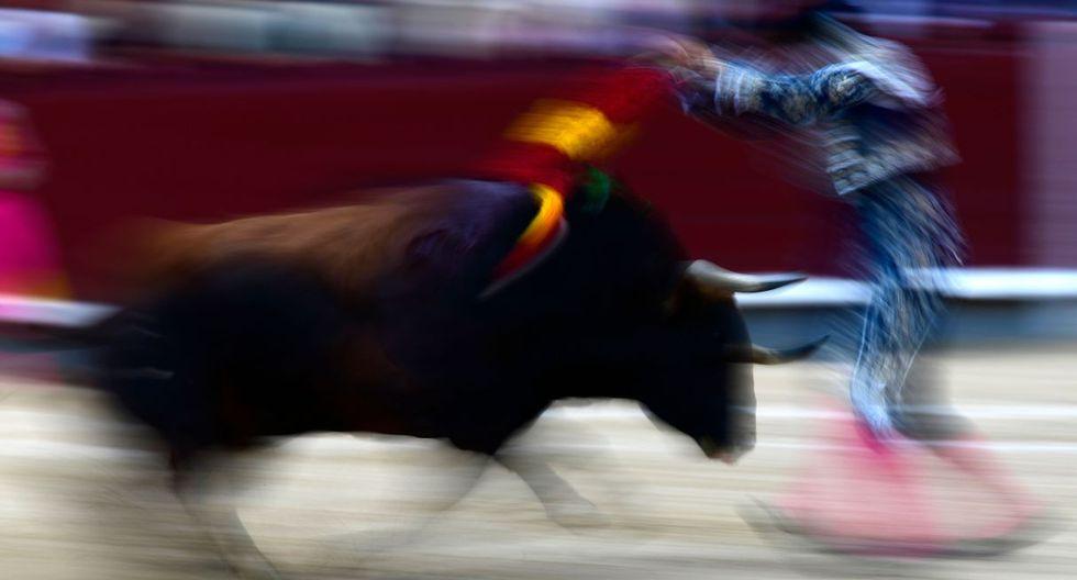 """En tono provocador, Casas añade: """"si yo tuviera que ser un animal, no escogería un gatito o un perrito, sino un toro de lidia. Moriría, claro, pero haría de mi destino la gloria"""". (Foto: AFP)"""