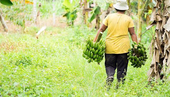 Con el Seguro Agrícola Catastrófico se busca beneficiar a 950,000 productores en todas las regiones del país. (Foto: GEC)