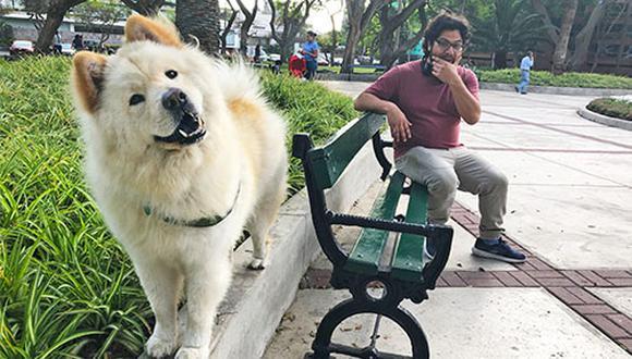 Antes de convertirse en Babu, este Chow Chow adoptado por Antonio Menéndez y su familia fue un perro Subaru y pasó varios meses en el portal de WUF como Toto