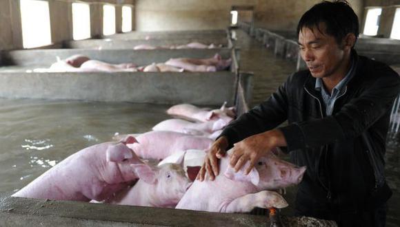 Tuvo que abandonar a sus cerdos por las inundaciones en China