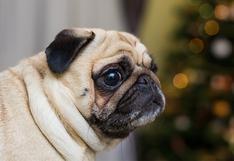 Fuegos artificiales: 5 consejos de WUF para tranquilizar a tu perro esta Navidad