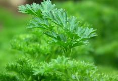 Verano: ¿Qué plantas y hortalizas puedes cultivar durante esta temporada?