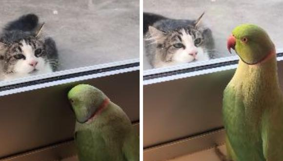 Una amistosa cotorra juega con su vecino felino y causa revuelo en Internet. (Foto: ViralHog en YouTube)