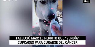 Muere el perrito que vendía cupcakes para pagar su tratamiento contra el cáncer