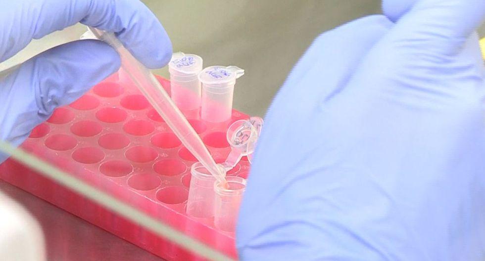 El medicamento, que ha superado todas las fases preclínicas con éxito, induce la infiltración de las células T del sistema inmune en los tumores para atacarlos y eliminarlos. (EFE)