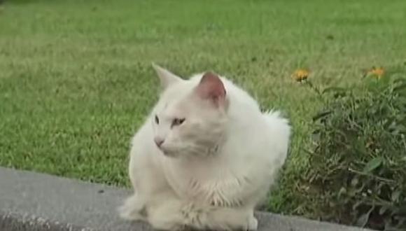 Serpar niega exterminio de gatos en Parque Universitario