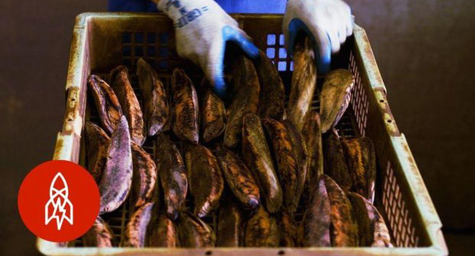 El artesano Takashi Suzuki, quien hace el producto a base de pescado desde hace 30 años, explica que preparar el alimento tarda casi seis meses. (Foto: YouTube)