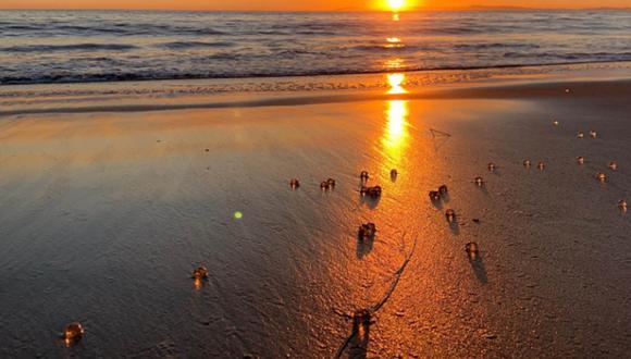 Estas extrañas bolitas transparentes aparecieron en las playas de California.  Foto: