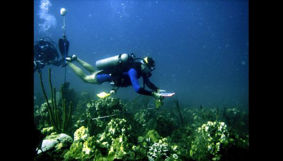 Los corales del Caribe pueden desaparecer en 20 años