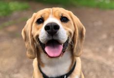 Mascotas: ¿Tu perro no te hace caso? No te preocupes, nunca es tarde para enseñarles