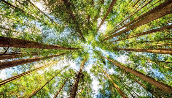 Los investigadores midieron más de medio millón de árboles en 813 bosques tropicales de todo el mundo para evaluar la cantidad de carbono almacenado. (Foto referencial: Shutterstock)