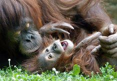 Día de la Madre: ellas son las mejores del reino animal [FOTOS]