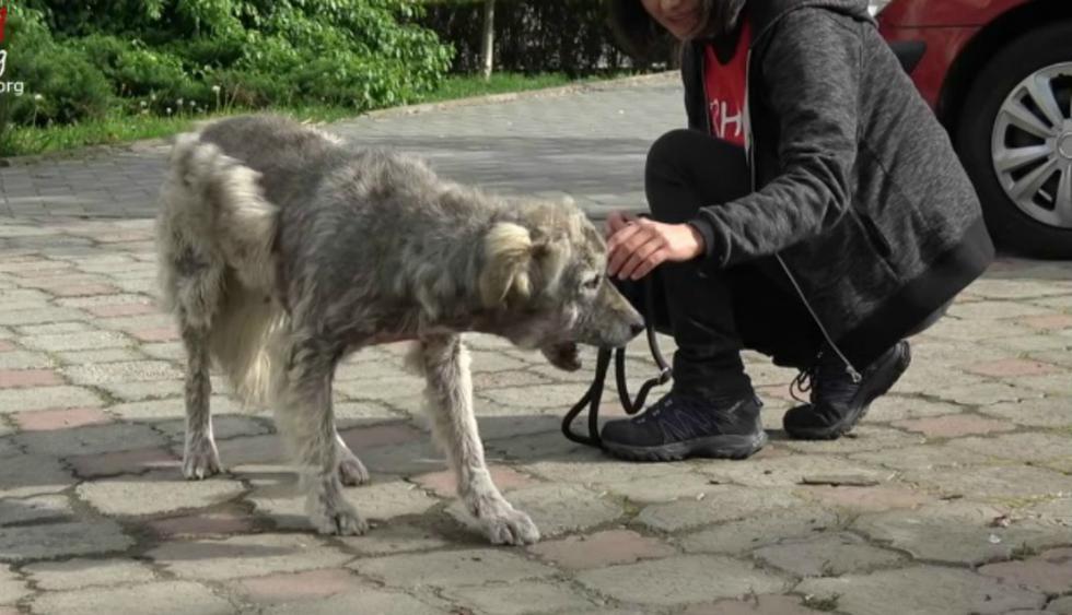 Se viralizó en Facebook el emotivo rescate de Heidi, una perrita que se las arregló para sobrevivir sola en las calles de Rumania. (Foto: Captura)