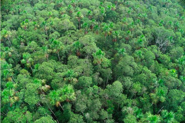 Bosque en la cuenca del río Tigre. Foto: R. Mondragón/DAR