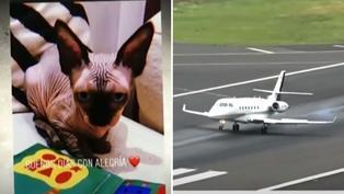 Gato de Cristiano Ronaldo fue enviado en un jet privado a España tras sufrir accidente