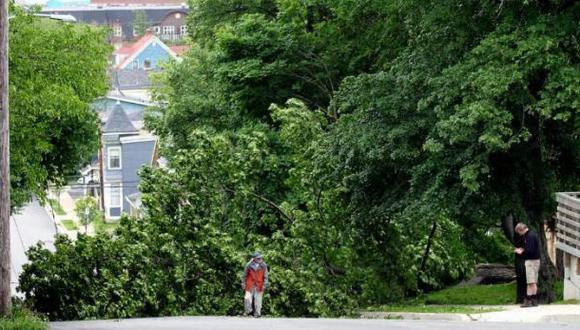 Los árboles salvan la vida de miles de personas al año