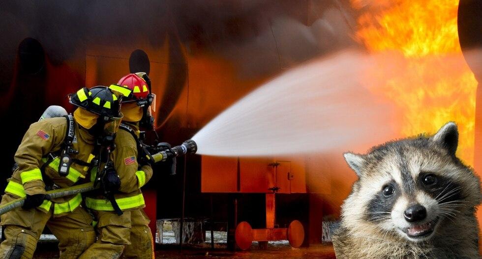 Cundo se trata de ayudar en situaciones de peligro como un incendio, los bomberos no dejan a nadie atrás ni siquiera a los animales. (Foto: Pixabay/Referencial)