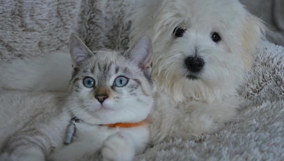 Los perros y gatos domésticos no pueden transmitir el nuevo coronavirus a humanos, pero pueden dar positivo por pequeños niveles del patógeno si se contagian de sus dueños. (Foto: Pixabay/Referencial)