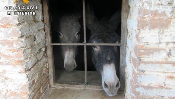 Hallan más de 40 animales muertos en una explotación ganadera en España. (Foto: Guardia Civil Facebook)
