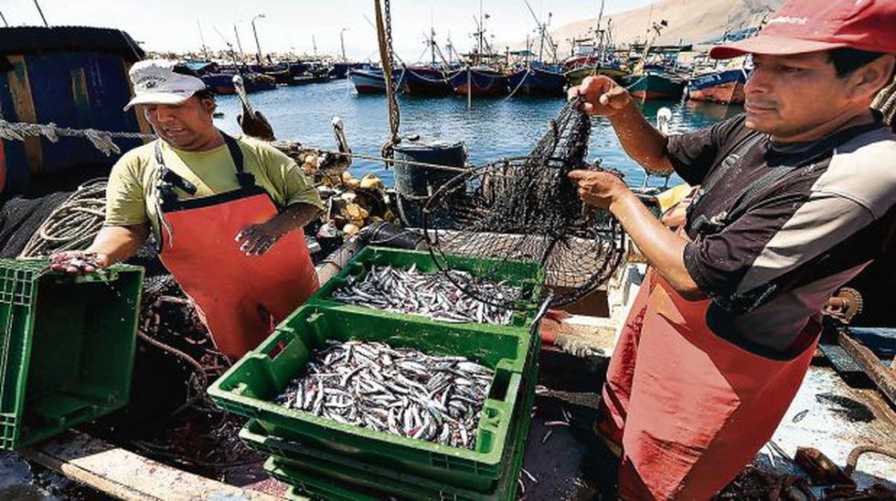 Produce publica norma para ordenamiento pesquero de anchoveta