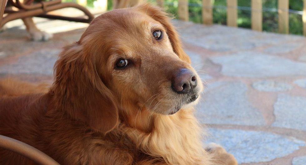 La ayuda del perro se ha hecho viral en Facebook, donde acumula más de 10.000 'Me gusta' (Foto: Pixabay/ Referencial)