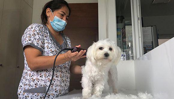 Tener mascota en casa es toda una responsabilidad y si tienes una con pelaje largo, más vale estar informado sobre cómo cuidarlo para evitar nudos innecesarios. (Foto: Andrea Carrión)