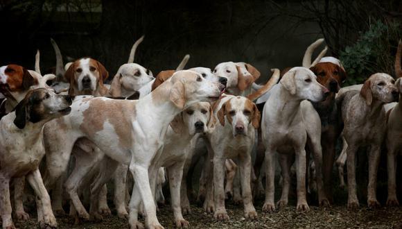 """Lanzado en 2013, """"Aunt Ju's Shelter for Stray Dogs"""" (""""Refugio de la tía Ju para perros callejeros"""") ha dependido durante mucho tiempo de donaciones para alimentar a más de 2.000 canes vagabundos y 300 gatos, que viven bajo su cuidado. (Foto: Referencial/Pixabay)"""