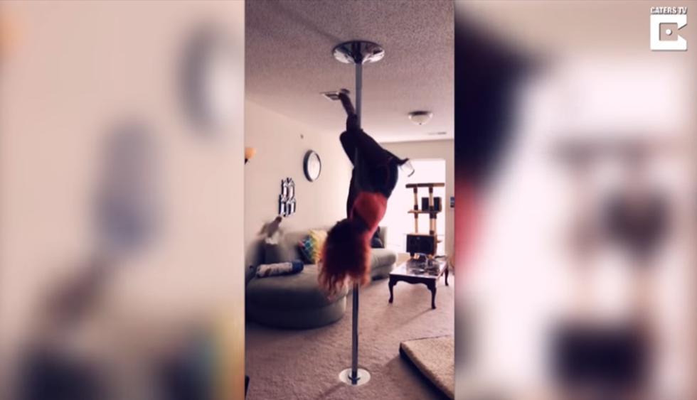 Loro atacó a su dueña en medio de su rutina de pole dance. (YouTube   Caters Clips)