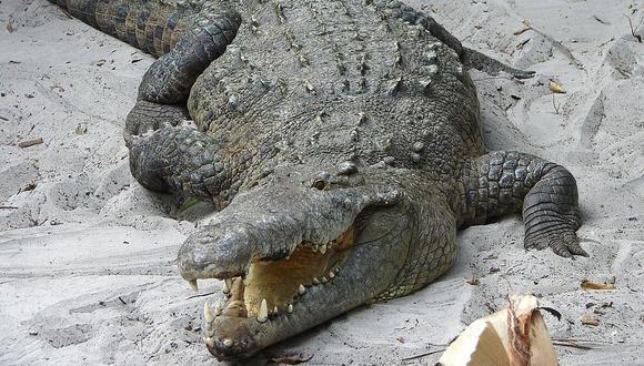Con la luz del sincrotrón se pudo analizar restos de cocodrilo antiguos y compararlos con reptiles actuales. (Foto: Pixabay)