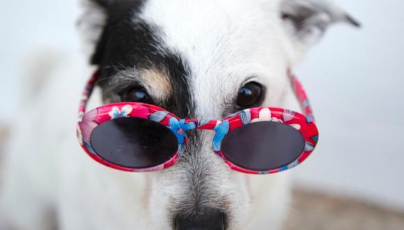 Los perros ven el mundo de forma diferente a como lo hacemos nosotros. (Ilargian Faus|Pexels)