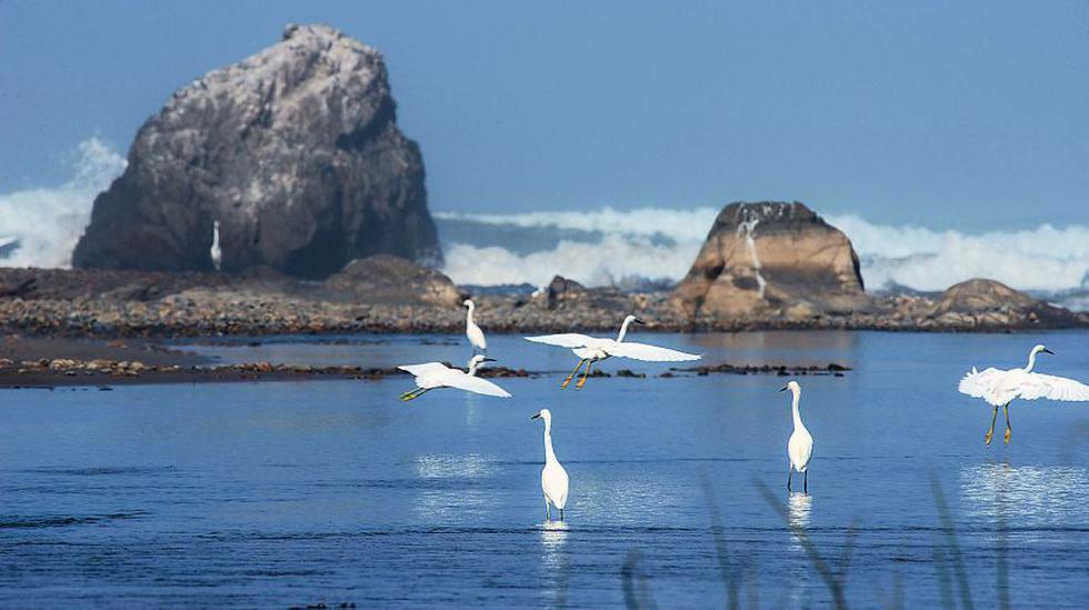 San Fernando tiene una extensión de 154 mil hectáreas. Además de playas y lomas, alberga al Huasipara (1.790 m.s.n.m.), el cerro más alto de la costa
