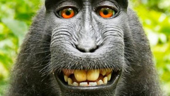 PETA sostuvo que esta foto es de una hembra llamada Naruto pero Slater afirmó que que se trataba de un macaco macho diferente. (Wildlife Personalities/David J. Slater)