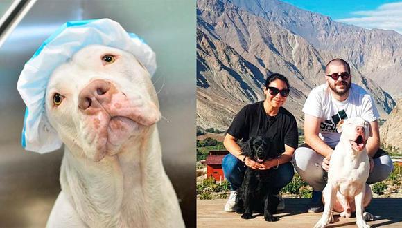 Izquierda: 'Chanchito' en la veterinaria Woof Spa, en donde le realizan sus baños medicados para la piel. Derecha: la familia en uno de sus viajes en el Perú. Fotos: cortesía de Miluska Peralta