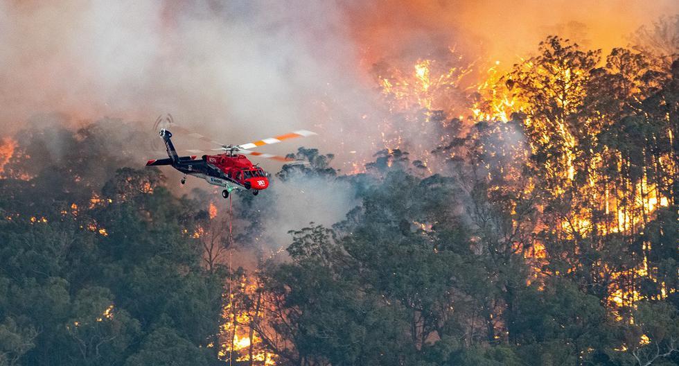 Los incendios forestales han causado 26 muertos desde septiembre, veinte de ellos en Nueva Gales del Sur. (EFE)