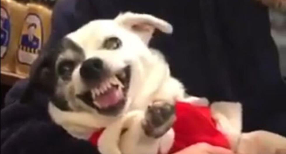 El perro mostró una singular reacción que a muchos podría hacer reír. (Captura)