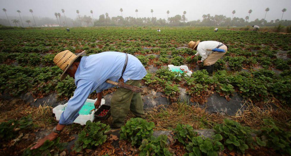 La ausencia de animales en las granjas aumentaría la cantidad de desperdicios agrícolas. (Foto: Reuters)