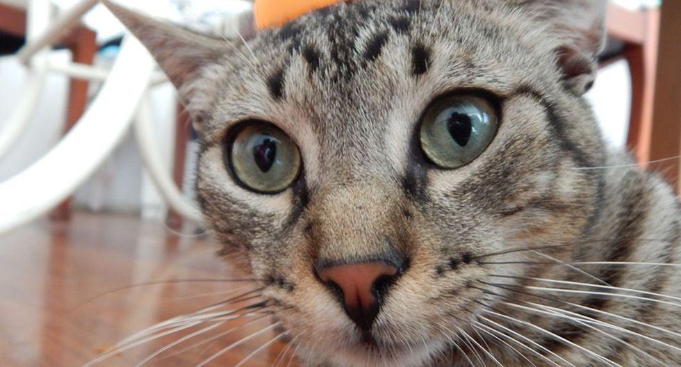 El accionar de un gato no deja de ser comentado por la comunidad de usuarios de YouTube. (Pixabay)