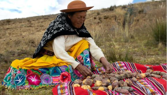 BUENA COSECHA. Mujer agricultora de la comunidad de Ñuñunhuayo. En las zonas altoandinas, la siembra de papa nativa comienza el mes de octubre y demora entre seis y siete meses en rendir frutos. (Gianfranco Salazar Calagua)
