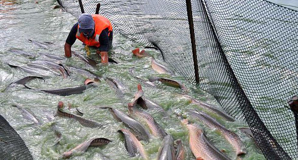 La titular del Produce también dijo que se está trabajando en ampliar los recursos de la pesca artesanal que son estudiados por el Instituto del Mar del Perú (Imarpe).