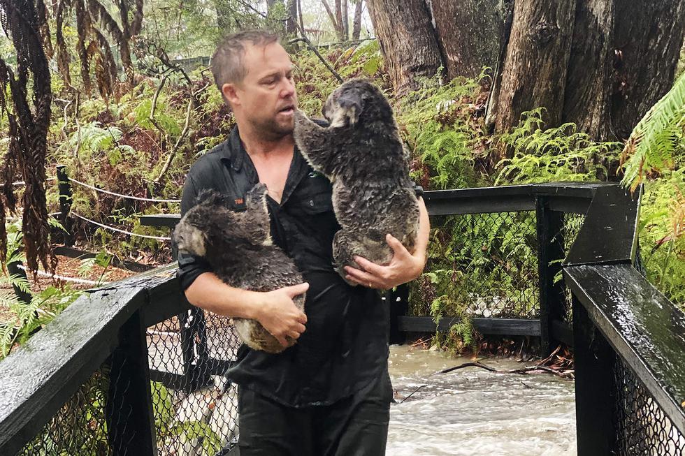 Las fuertes lluvias cayeron sobre los incendios forestales en el este de Australia por segundo día consecutivo, ofreciendo un mayor alivio de una crisis de meses, pero decenas de incendios permanecieron fuera de control. (Foto: AFP).