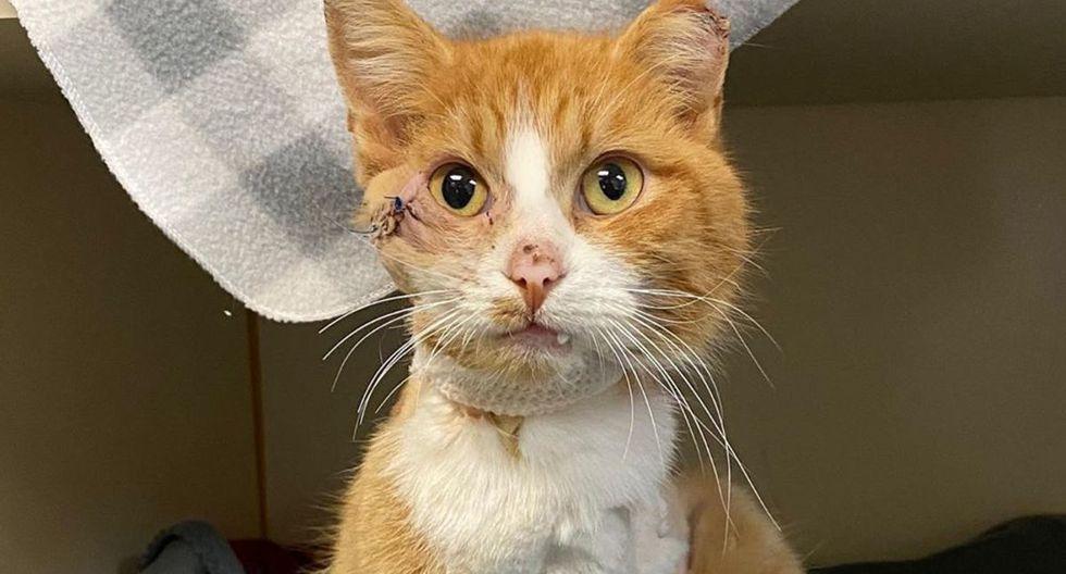 El pequeño felino tenía una flecha de 5 pulgadas atravesada desde la comisura de su ojo derecho. (Foto: Instagram)