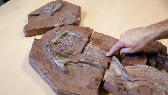 Rayos X superpotentes revelan el esqueleto de un dinosaurio