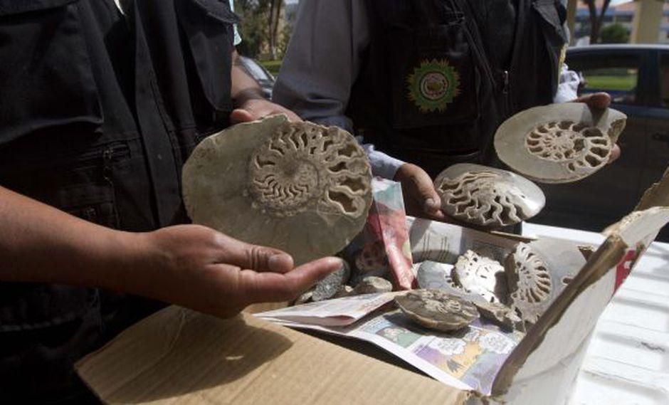 Fiscalía incauta más de 160 fósiles en tienda de Sacsayhuamán