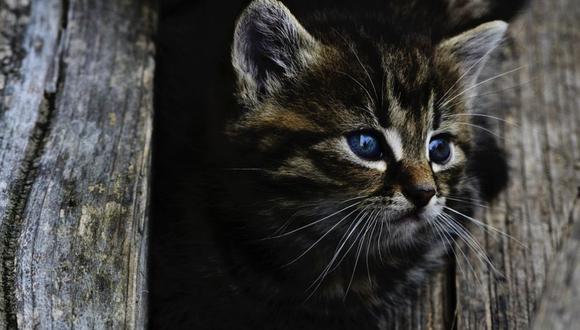 Los restos mutilados de cientos de gatos y otros pequeños animales, como conejos, fueron hallados en el barrio de Croydon y otras zonas cercanas del sur de la capital inglesa desde 2015. (Pixabay / petkation)