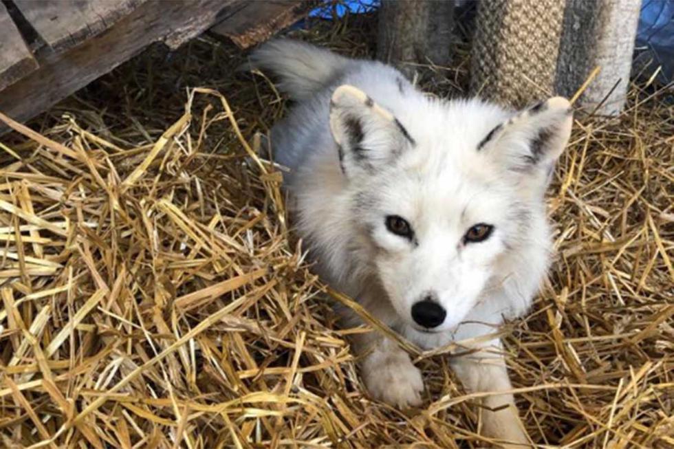 Un policía de Minnesota tuvo que lidiar con un 'perro del tamaño de un zorro' ante la llamada de uno de los vecinos. | Foto: Facebook/Coon Rapids Police Department