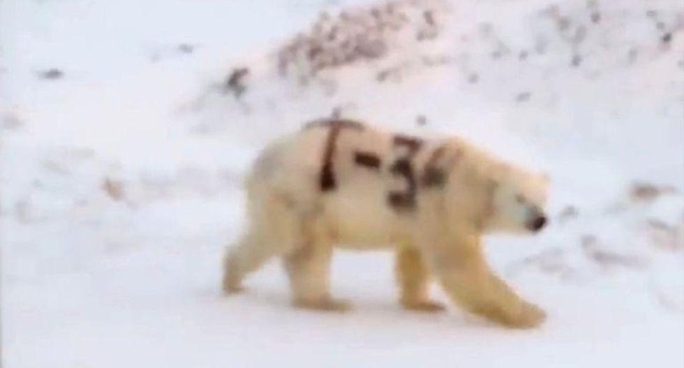 Esta imagen de un oso polar con una letra y números pintados en negro sobre su cuerpo despertó la preocupación de los científicos. (Foto: Sergey Kavry/Facebook)